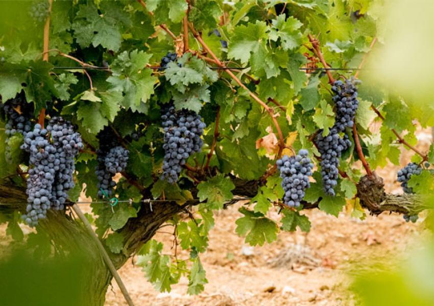 Escapada vinícola